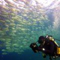 Mabul-Diving